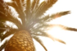 Blurred Background with Palm