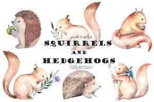 watercolor Squirrels & Hedgehogs