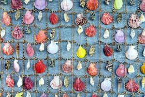Collection of different seashells.