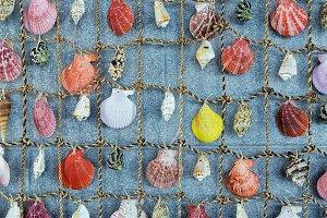 Colorful Seashell background