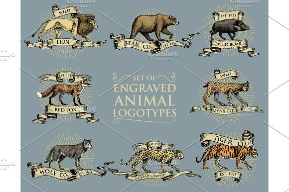 Big Set Of Vintage Emblems Logos Or Badges With Wild Animals Tiger Lion King Bobcat Lynx Leopard And Boar Bear And Wolf Red Fox Hand Drawn Engraved