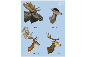 moose or eurasian elk, tufted deer, roe or doe, axis vector hand drawn illustration, engraved wild animals with antlers or horns vintage looking heads side view