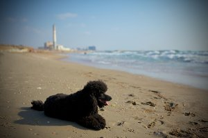 Relaxed dog on beach