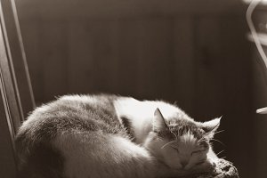 cat sleeping in vintage country interior retro  photo