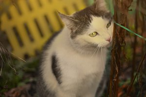 country cat spring outdoor portrait