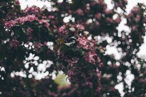 Apple-tree #7