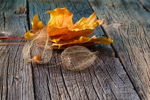 Dry cape gooseberry and leaves
