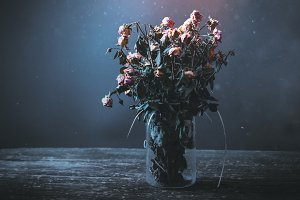 Dired bunch of roses in a vase