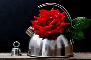Kettle  and red rose