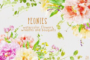 Watercolor Flowers - Peonies