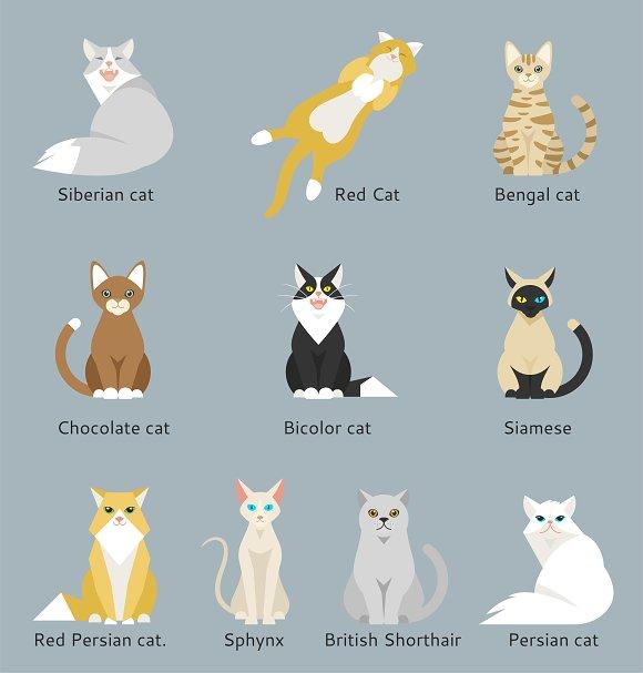 Different cartoon cats set.