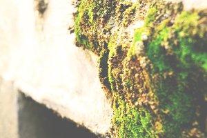 A Little Green Moss