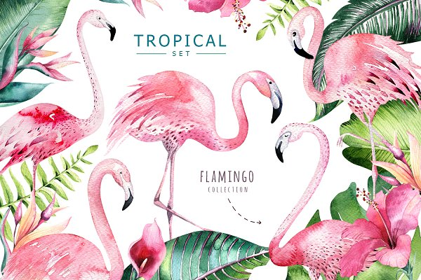 Tropical set II. Flamingo collectio…