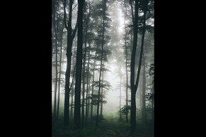 Forest in morning with fog
