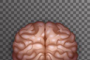 Human Brain Realistic