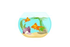 Aquarium fish, seaweed underwater, marine animal isolated on white