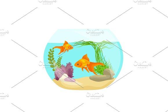Aquarium Fish Seaweed Underwater Marine Animal Isolated On White