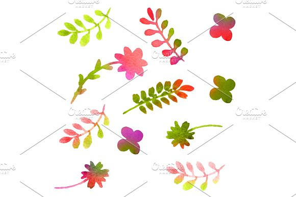 Watercolor Floral Set Isolated On White