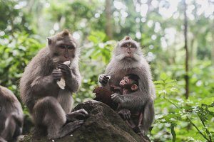 monkeys in the rainforest