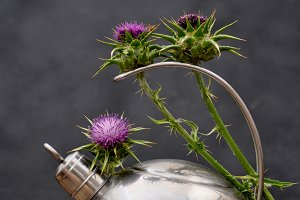 Kettle and thistles