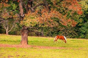 Horse / nature / Gras