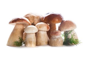 Ceps isolated
