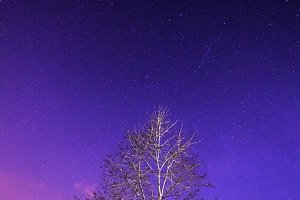 Starry night sky over tree and small house