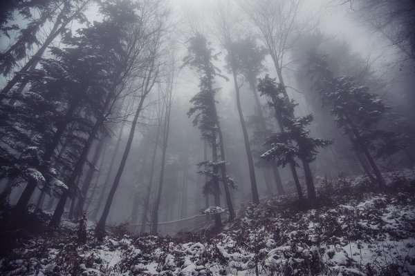 Dark and Gloomy Forest in Winter
