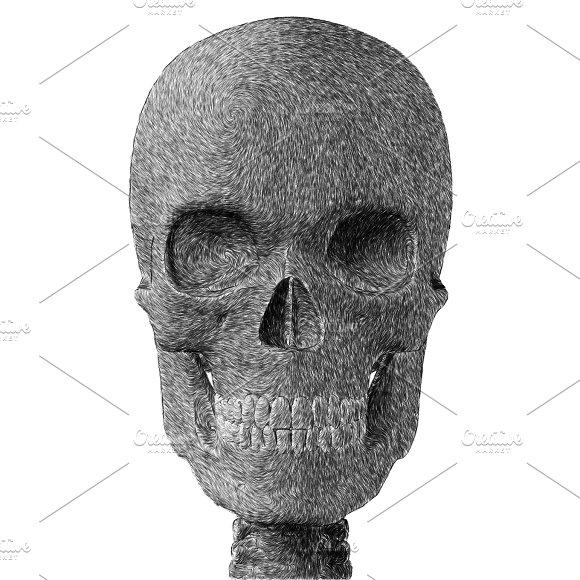 Skull Pencil Sketch