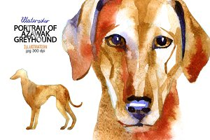 Watercolor Azawak Greyhound.