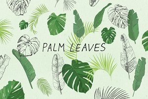 Palm Leaves Variations