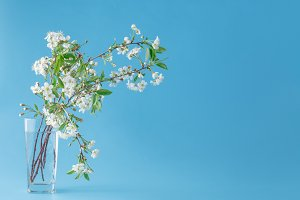 cherry branch in glass