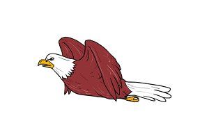 Bald Eagle Flying Cartoon