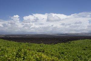 Hawaii Lava Beauty