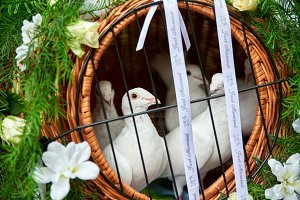 wedding doves bring fly and bring peace