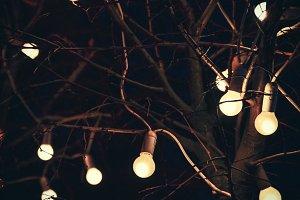 Glowing light bulbs on tree