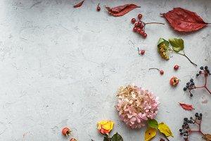 Autumn herbarium: dried flowers