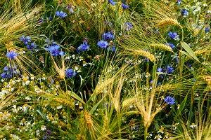 meadow flowers on field