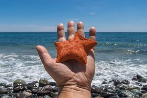 Starfish on the hand