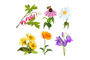 Set of echinacea, bleeding heart flowers, arnica, viola, chamomile, poppy