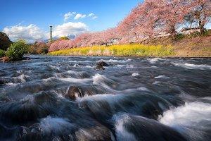 Spring time in Japan