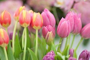 Tulips in a flower shop