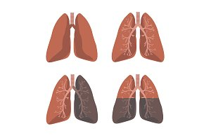 Human Lung Anatomy Set. Vector