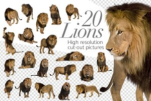 20 Lions - Cut-out High Res Pictures