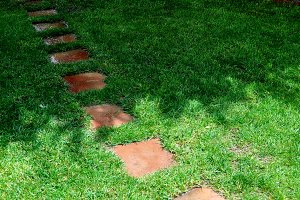 Cut grass and path