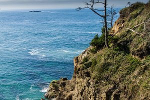 Lone tree on rocky headland