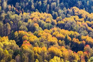 Autumn nature in the mountains