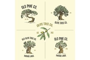 olive and pine tree logos engraved or hand drawn, isolated old looking emblem for ecology, camping or food branding