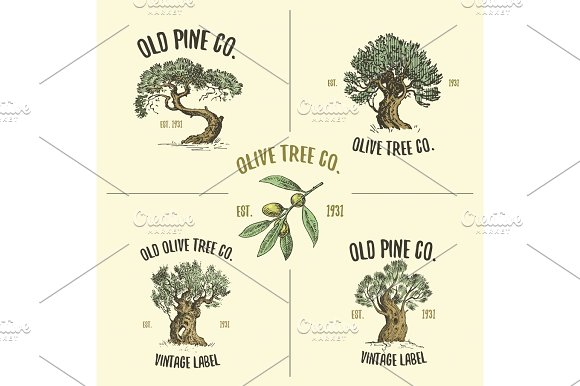 olive and pine tree logos engraved or hand drawn, isolated old looking emblem for ecology, camping or food branding in Illustrations