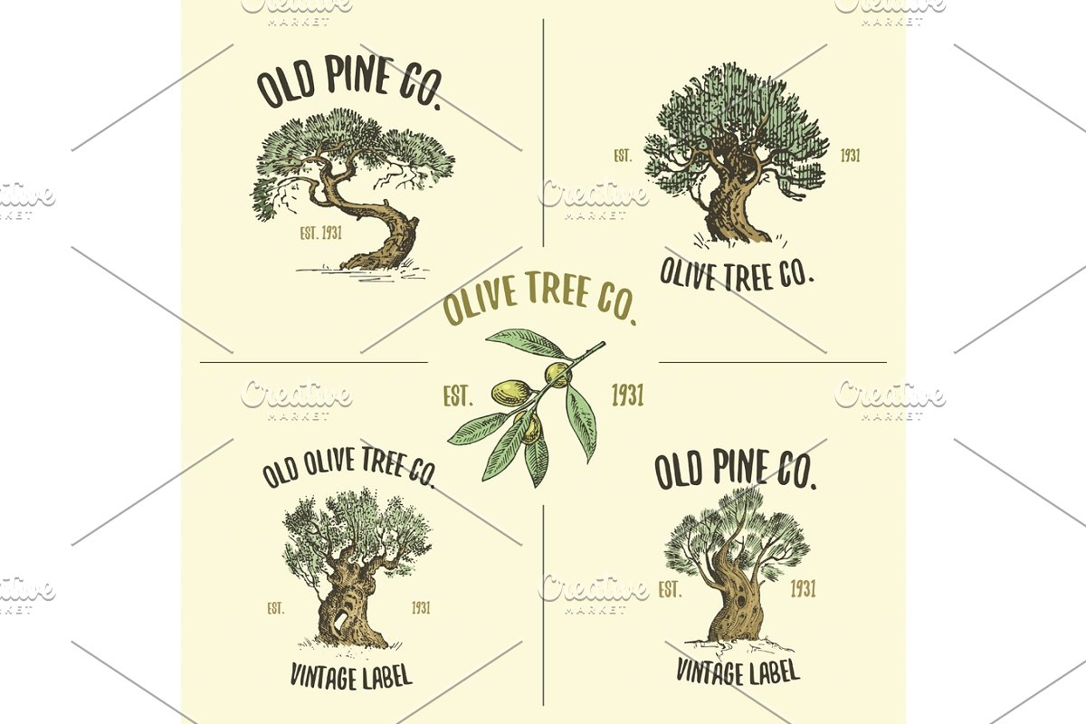 olive and pine tree logos engraved or hand drawn, isolated old looking emblem for ecology, camping or food branding in Illustrations - product preview 8